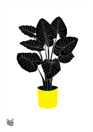 Black&Yellow Plant