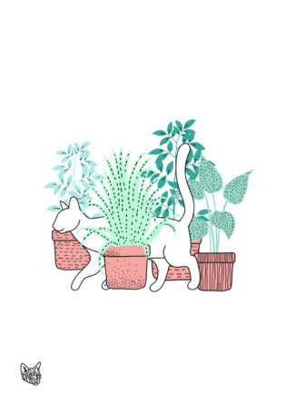 Cat in Plants